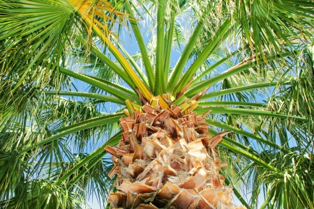 Green palm tree against blue clear sky
