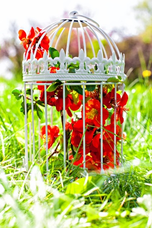 Vintage birdcage filled with spring blossom on the meadow photo