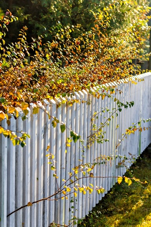 Beautiful autumn leaves along white fence