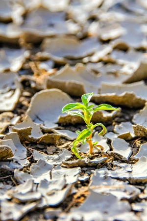 Close-up of small sprout growing on cracked dried up earth photo