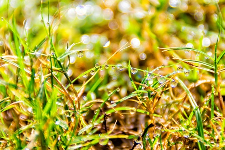 Macro of dew drops on blades of grass in bright morning sunlight Stock Photo