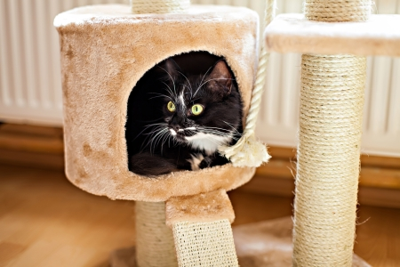 Beautiful cat laying in box on the scratching post photo