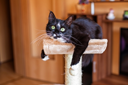 Beau chat pose dans un hamac sur le griffoir