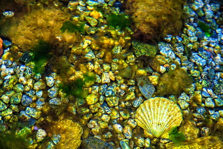thickness: Bottom of the sea with stones and shells on a sunny day Stock Photo