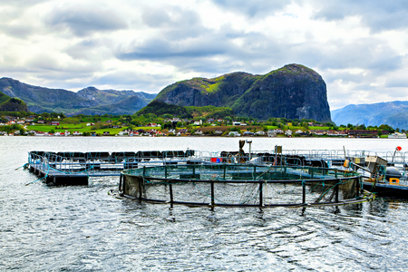 The traditional fish farm in Lysefjord, Norway Stock Photo