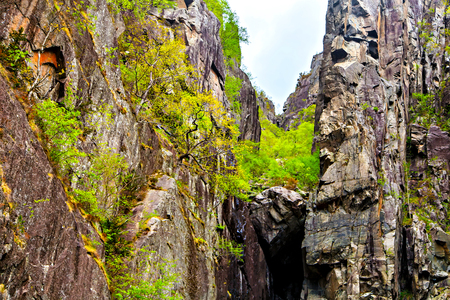 deepening: Norwegian landscape: the high cliffs and trees