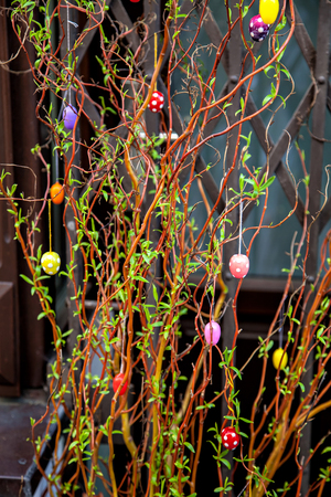Easter decoration shrub, colorful Easter eggs hanging on branches photo