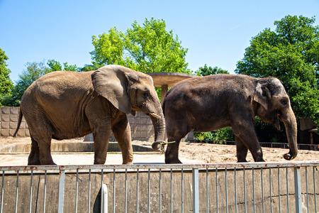 동물원, 독일에서 두 elefants 스톡 콘텐츠