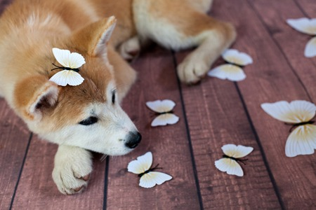 butterflys: Cute Dog With Deco Butterflys