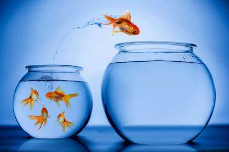 金の魚 写真素材 - 29678407