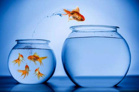 fish tank: Gold Fish