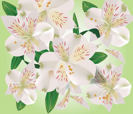 fragrant bouquet: Realistic bouquet of lily flowers with green leaves. Vector Illustration