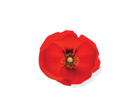 分離した赤ロマンチックなポピーの花。ベクトル図