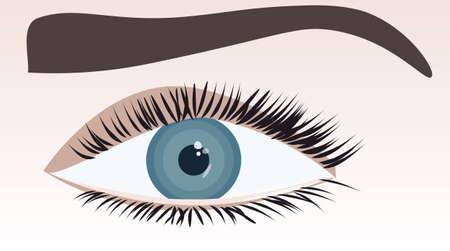human eye: Human blue eye. Vector