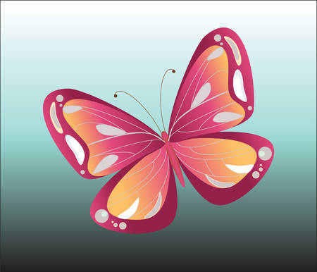 butterfly isolated: Colorful Butterfly isolated. Background. Vector
