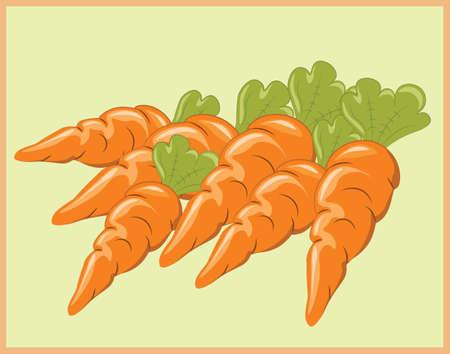 bunch: Bunch of Carrots. Vector
