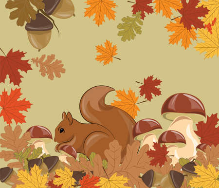red squirrel: Squirrel in Forest. Autumn background with leaves, acorn and mushrooms. Vector
