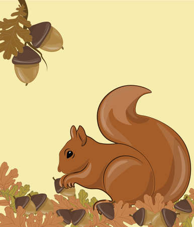 isolated squirrel: Squirrel in Forrest. Autumn background with leaves, acorn and mushrooms. Vector