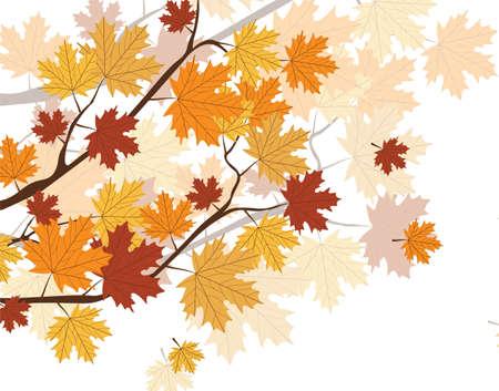 autumn tree: Orange Autumn Maple Leaves on tree. Vector