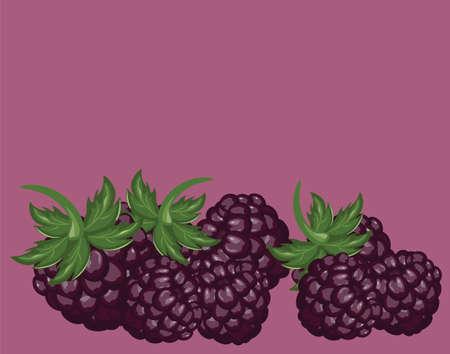 blackberries: Blackberries delicious dessert. Vector