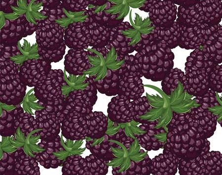 delicious: Blackberries delicious dessert. Vector
