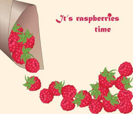 wrap: Raspberry time. Fresh Red Raspberry background in paper wrap. Vector Illustration