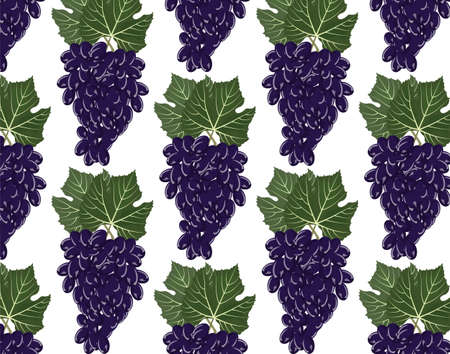 viticulture: Grapes clusters pattern. Vector