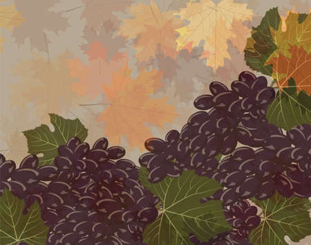 wine grapes: Grapes background. Vector