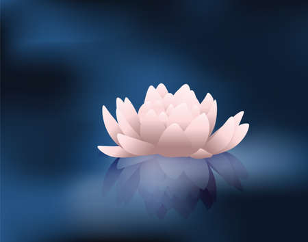 water reflection: Water lily flower with reflection. Vector Illustration