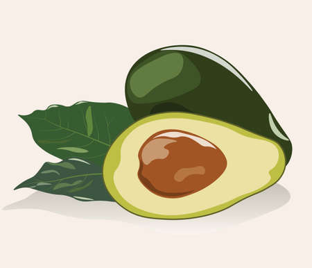 shinning leaves: Avocado fruit isolated. Vector