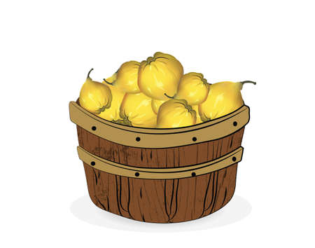 quince: Quince fruits in a wooden basket. Vector