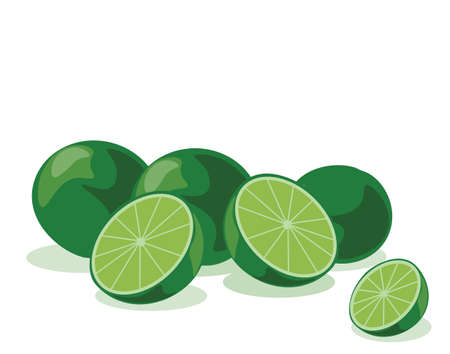 fruited: Lime fruits isolated. Vector