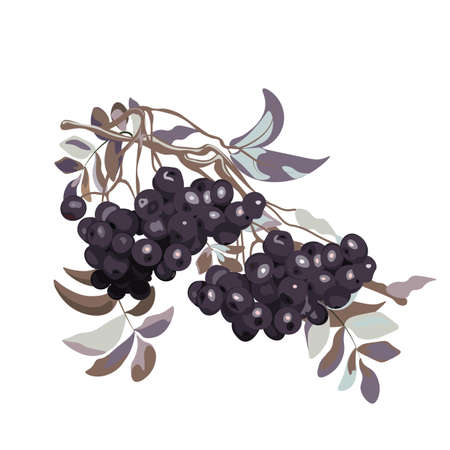 viburnum: Viburnum berries branch stylized. Vector Illustration