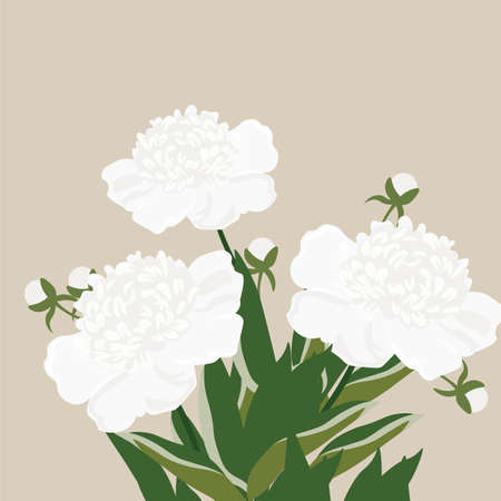 white cream: Vintage Watercolor peony flowers Vector isolated on white. Cream white peonies bouquet. Watercolor, hand painted, isolated on white background. Vector illustration