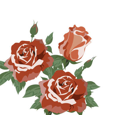 Vintage Watercolor roses Vector isolated on white. Red roses bouquet. Watercolor, hand painted, isolated on white background. Vector illustration Vetores