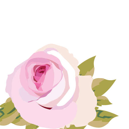 Flor rosada de la acuarela aislada. Rosas florecientes de la acuarela de la vendimia. Vector acuarela rosa para invitación de boda, aniversario, celebración, eventos