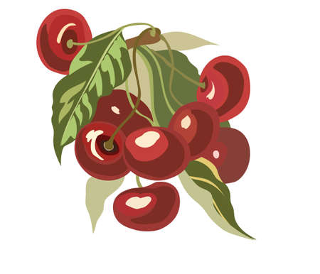 grocery store series: Cherry fruits Watercolor Vector Illustration
