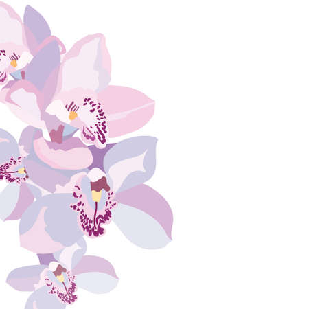 orchid: Vector Orchid flowers isolated Illustration