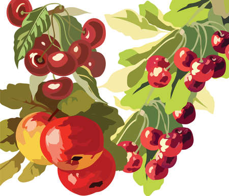 Apple and Cherry fruits Watercolor Vector Illustration