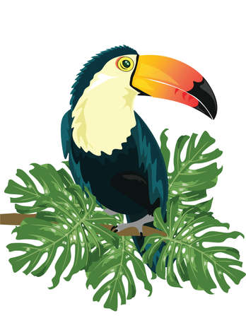 tucan: Vector Toucan sitting on tree branch isolated on white background. Tropical birds