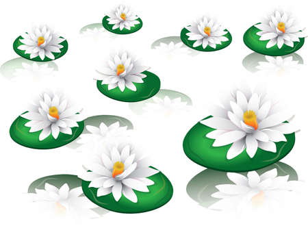 water lilies: White water lilies Vector on white background