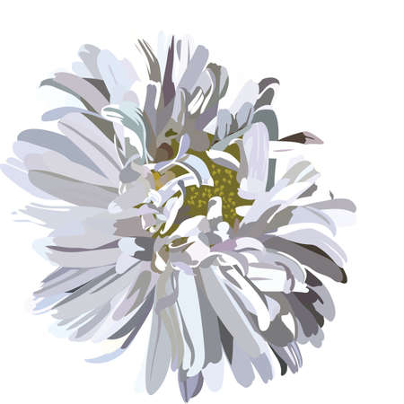 aster: Beautiful Aster flower isolated on white Vector. Spring Summer Flower for greeting cards and invitations of wedding, birthday, mothers day and other seasonal holiday