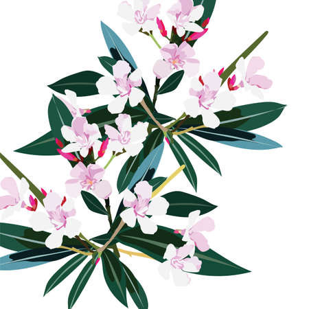 oleander: Pink flowers branch isolated Vector. Exotic Summer floral background Illustration