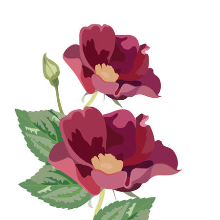 Anemone flowers isolated on white. Vector Red flower spring blossom seasonal background