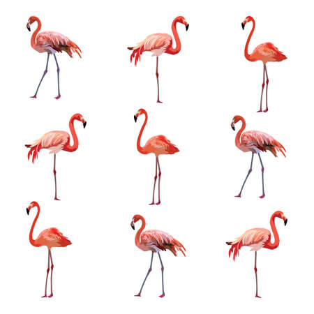 subtropics: Flamingo birds pattern Vector