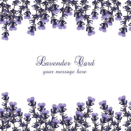 lavanda: Lavender Card decorated Border. Gentle blossom floral Lavanda bouquet. Vintage Label with lavender beautiful fragrance Illustration