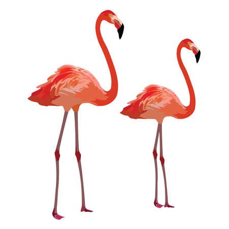 subtropics: Flamingo birds Vector isolated on white
