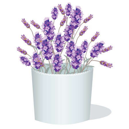 aromatic: Lavender flowers in a white pot. Aromatic gift decor in watercolor paint style Vector. Gentle blossom floral bouquet. Vintage Label with lavender beautiful fragrance Illustration