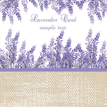 provence: Lavender Card with provence style border. Vector Gentle blossom floral bouquet. Vintage Label with lavender beautiful fragrance