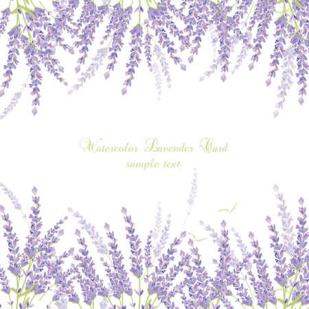 Lavender granica karta wektor. Delikatny kwiat kwiatowy bukiet. Vintage Label pięknym zapachu lawendy